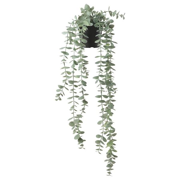 """FEJKA Artificial potted plant, indoor/outdoor hanging/eucalyptus, 3 ½ """""""