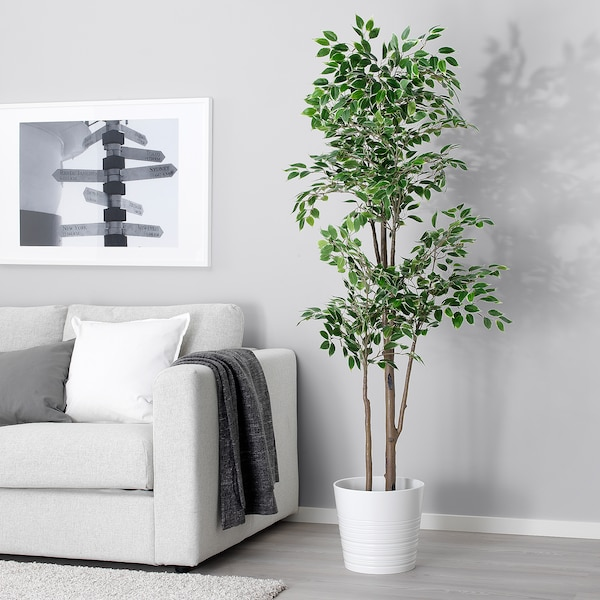 """FEJKA Artificial potted plant, Weeping fig, 8 ¼ """""""
