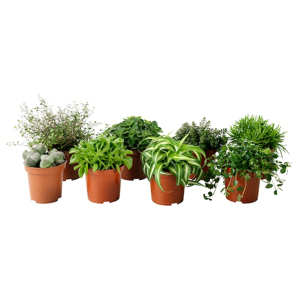"""HIMALAYAMIX Potted plant, assorted species plants, 4 """""""