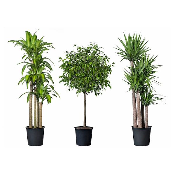 "TROPISK potted plant tropical plant/assorted species plants 12 "" 55 """
