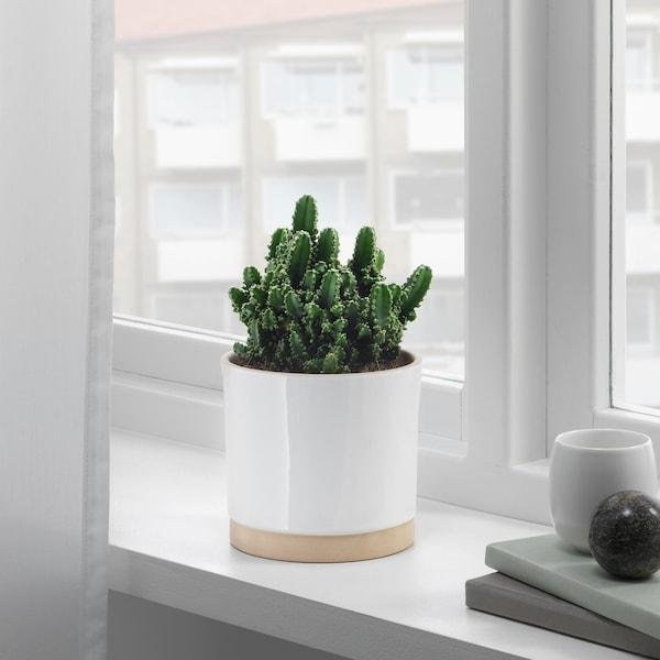 """UPPVAKTA plant pot white/natural 5 """" 5 ½ """" 4 ¾ """" 5 """""""
