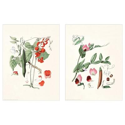 "BILD Affiche, Botanique, 12x16 """
