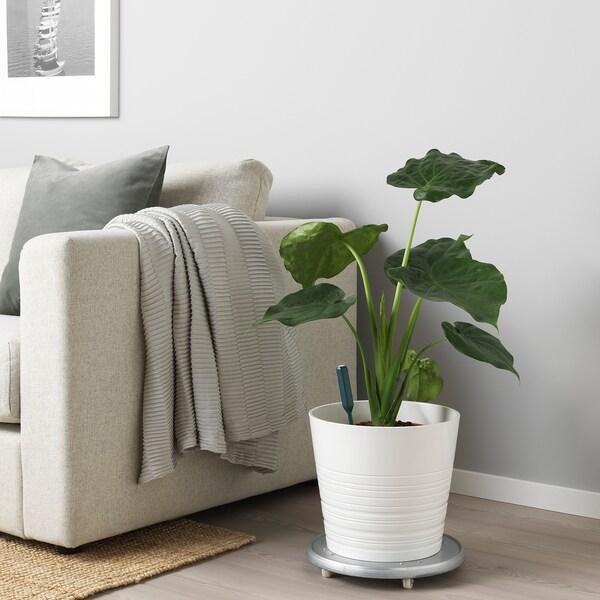 CHILIPULVER Feuchtigkeitssensor für Pflanzen, grün