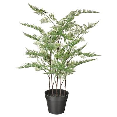 FEJKA Topfpflanze, künstlich, drinnen/draußen Zierspargel, 12 cm