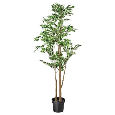 FEJKA Topfpflanze, künstlich, Ficus grünlaubig, 21 cm