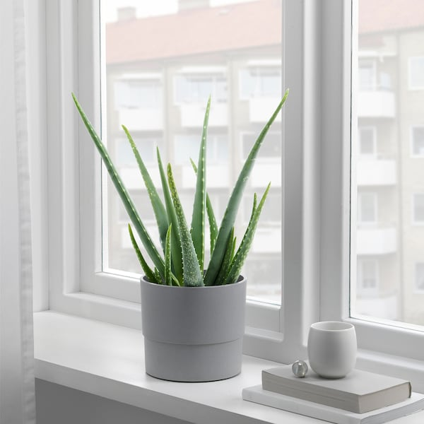 NYPON Übertopf, drinnen/draußen grau, 15 cm