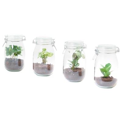 BLADVERK Plant terrarium, jar, assorted, 1.8 l
