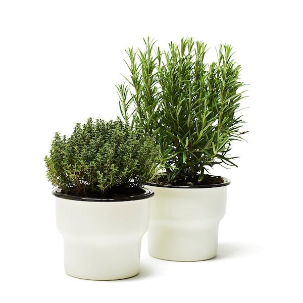 CITRONSYRA plant pot in/outdoor/white 12 cm 14 cm 12 cm 13 cm