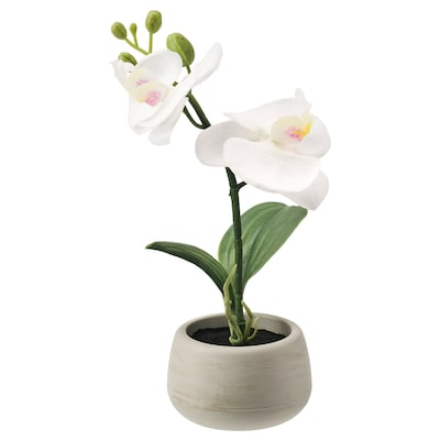 FEJKA Artificial potted plant with pot, in/outdoor/Orchid white, 7 cm