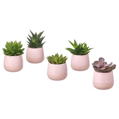 SUCCULENT Potted plant with pot, pink, 6 cm