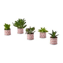 SUCCULENT potted plant with pot, assorted