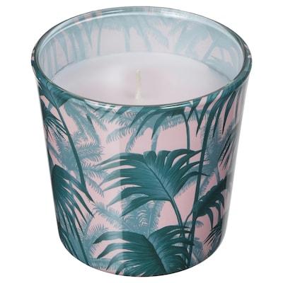 AVLÅNG bougie non parfumée, support verre feuille de palmier vert 7.5 cm 8 cm 25 hr