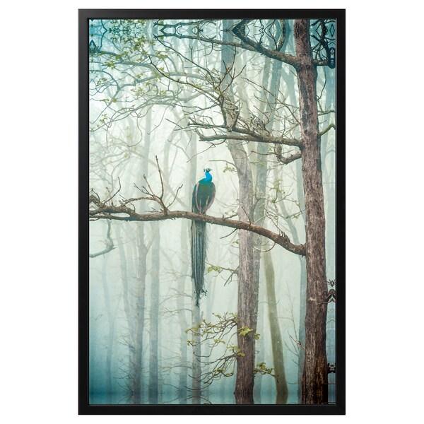 BJÖRKSTA Image avec cadre, Paon/noir, 118x78 cm