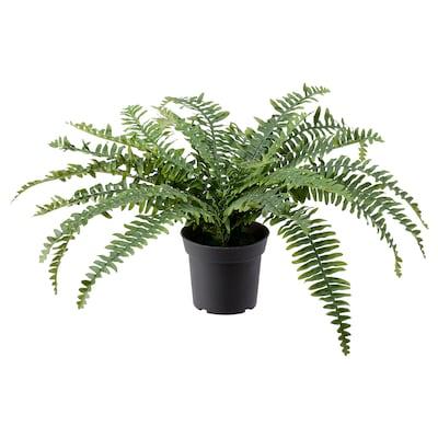FEJKA Plante artificielle en pot, intérieur/extérieur fougère, 15 cm