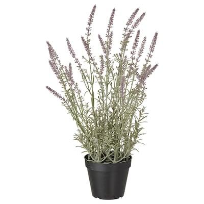 FEJKA Plante artificielle en pot, intérieur/extérieur/lavande mauve, 12 cm