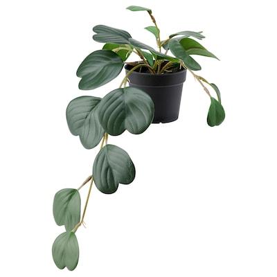 FEJKA Pianta artificiale con vaso, da interno/esterno a sospensione/Peperomia, 9 cm