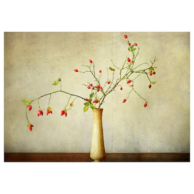 PJÄTTERYD Canvas, Cinorrodo, 100x70 cm
