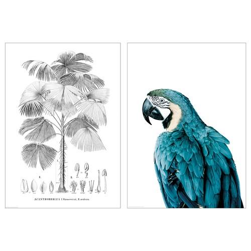 BILD plakát Pták a strom 50 cm 70 cm 2 ks