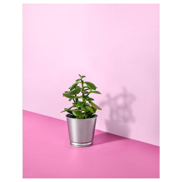 BINTJE květináč galvanizováno 10 cm 11 cm 9 cm 10 cm