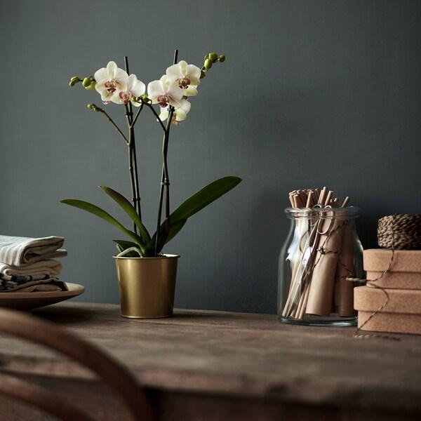 DAIDAI Květináč, mosazná barva, 9 cm
