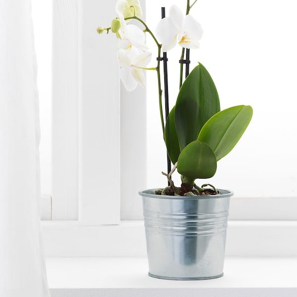 SOCKER Květináč, vn./venkovní/galvanizováno, 10.5 cm