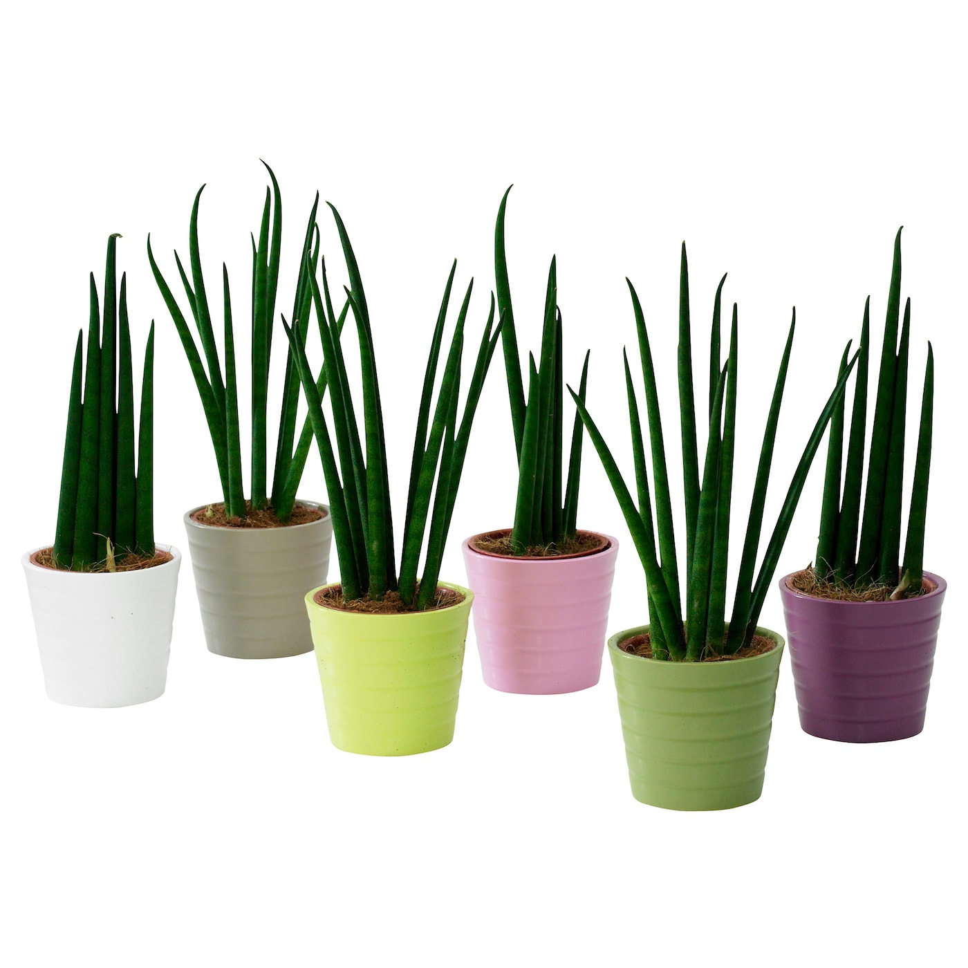 sansevieria pflanze mit bertopf bogenhanf ikea tipps vom einrichter. Black Bedroom Furniture Sets. Home Design Ideas
