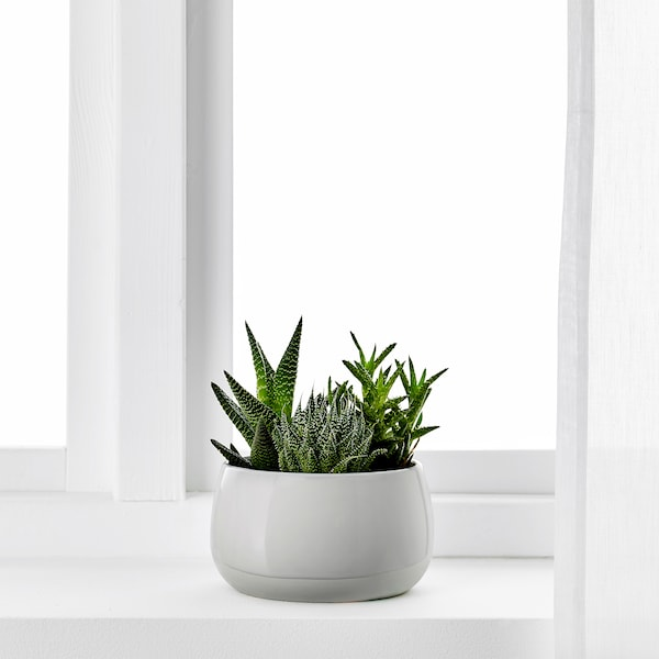 SUCCULENT Pflanze mit Übertopf grau 12 cm 7 cm