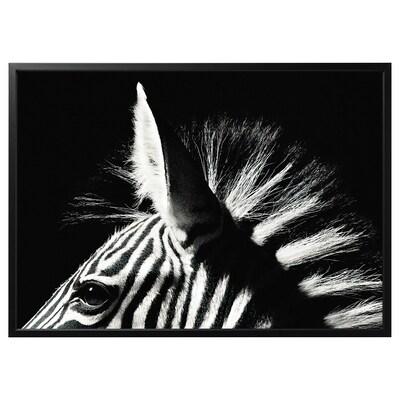 BJÖRKSTA Billede med ramme, Zebra/sort, 140x100 cm