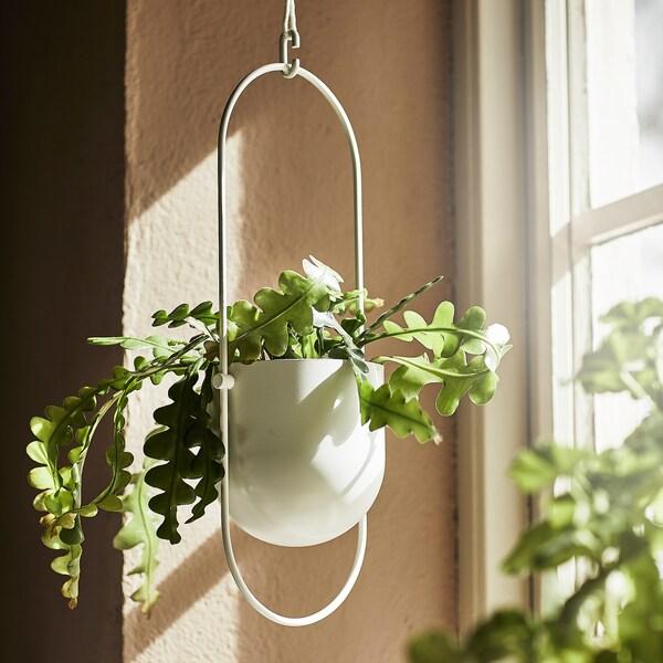 CHILISTRÅN Ampel, indendørs/udendørs hvid, 12 cm