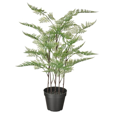 FEJKA Kunstig potteplante, indendørs/udendørs ASPARAGUS PLUMOSUS, 12 cm