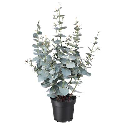 FEJKA Kunstig potteplante, indendørs/udendørs eukalyptus, 15 cm