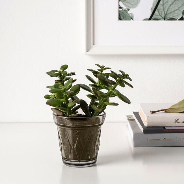 VÄLDOFT Duftlys i glas, Saltkaramel/grå, 8 cm