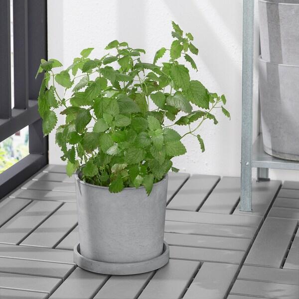 BOYSENBÄR صحن نباتات, داخلي/خارجي رمادي فاتح, 19 سم