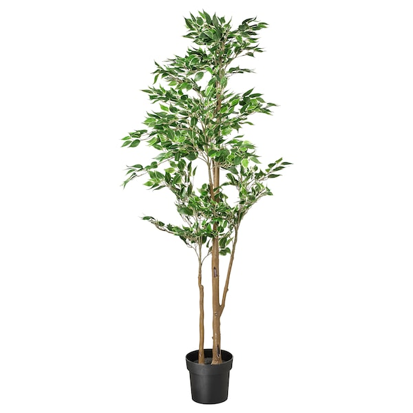 FEJKA Planta artificial, interior/exterior Ficus benjamina Exotica, 21 cm