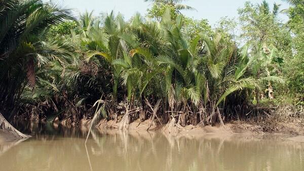 LUSTIGKURRE Cistell, marró/palma nipa, 57x57x40 cm