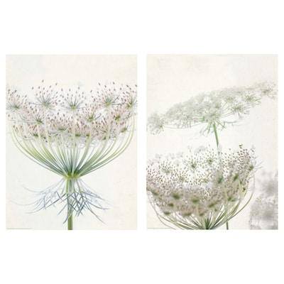 BILD Poster, Lacy blooms, 30x40 cm