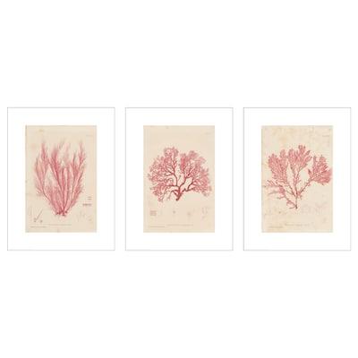 BILD Poster, Seaweeds, 30x40 cm