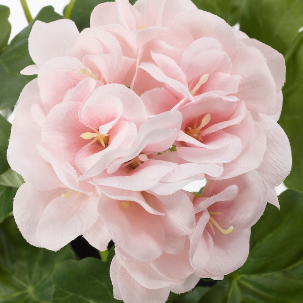 FEJKA artificial potted plant in/outdoor/Geranium pink 12 cm 38 cm