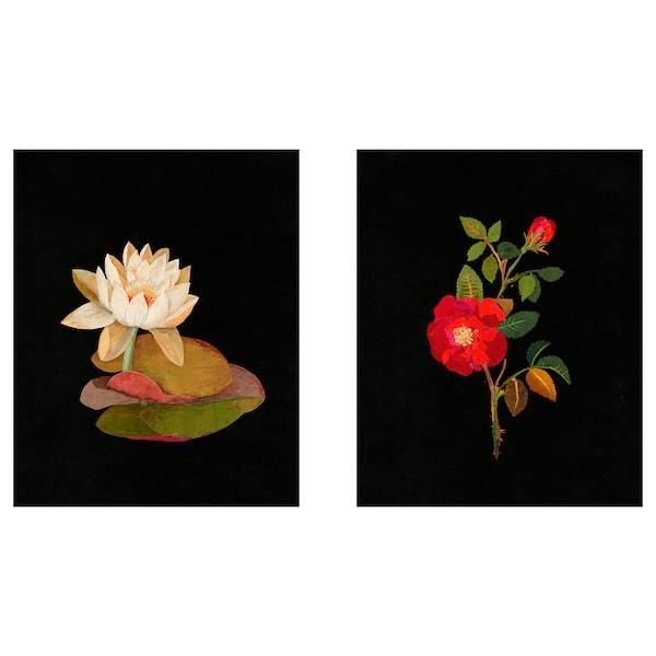 BILD Lámina, Flora Delanica I, 40x50 cm