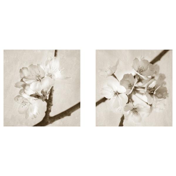 BILD Lámina, Flora Maia, 50x50 cm