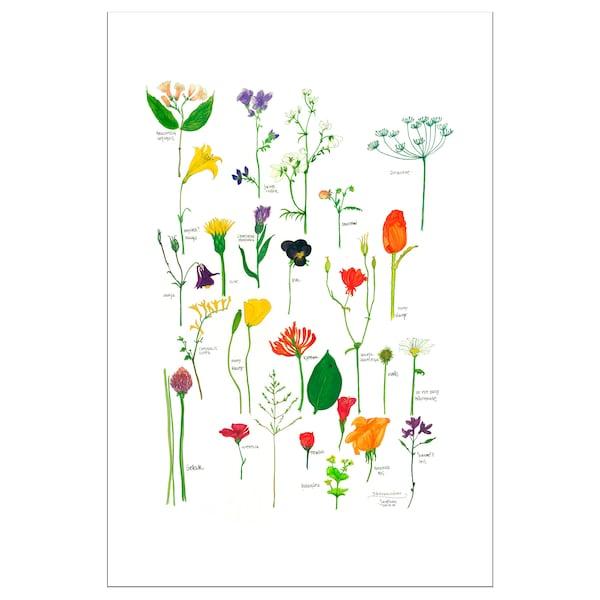 BILD Lámina, floración, 61x91 cm