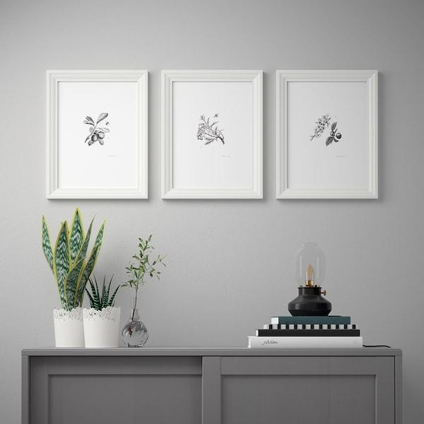 BILD Lámina, flores de jardín, 30x40 cm