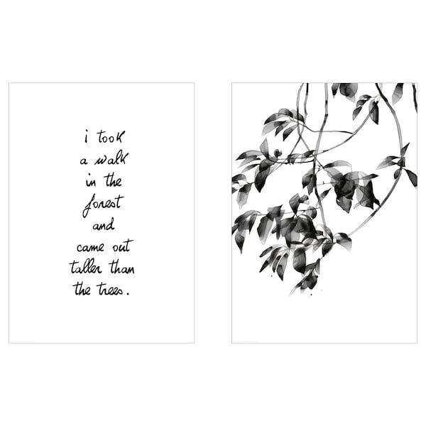 BILD Lámina, paseo por el bosque, 50x70 cm