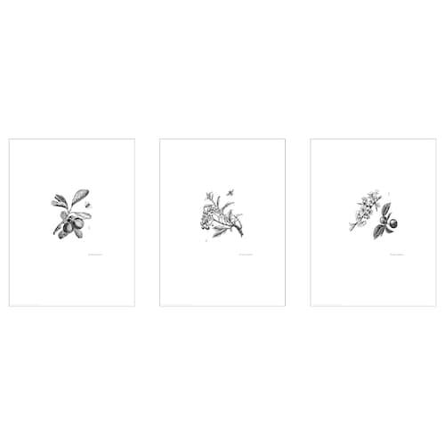 BILD lámina flores de jardín 30 cm 40 cm 3 unidades