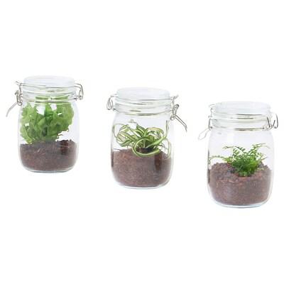 BLADVERK Terrario en bote, mezcla de especies de plantas, 1.1 l