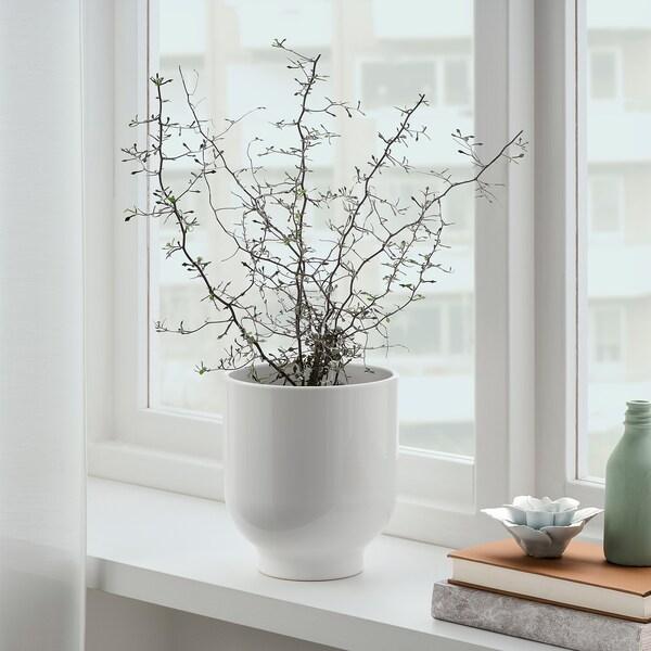 DRÖMSK Macetero, blanco, 15 cm