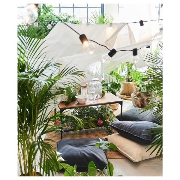 IKEA DYPSIS LUTESCENS Planta