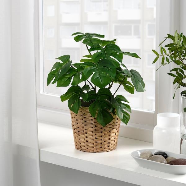 FEJKA Planta artificial, int/ext monstera, 12 cm