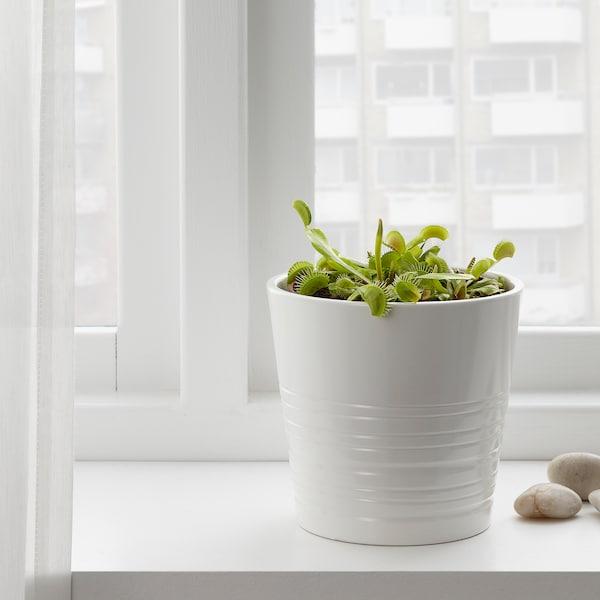 GRÖNSKAN Planta, planta carnívora/mezcla de especies de plantas, 12 cm
