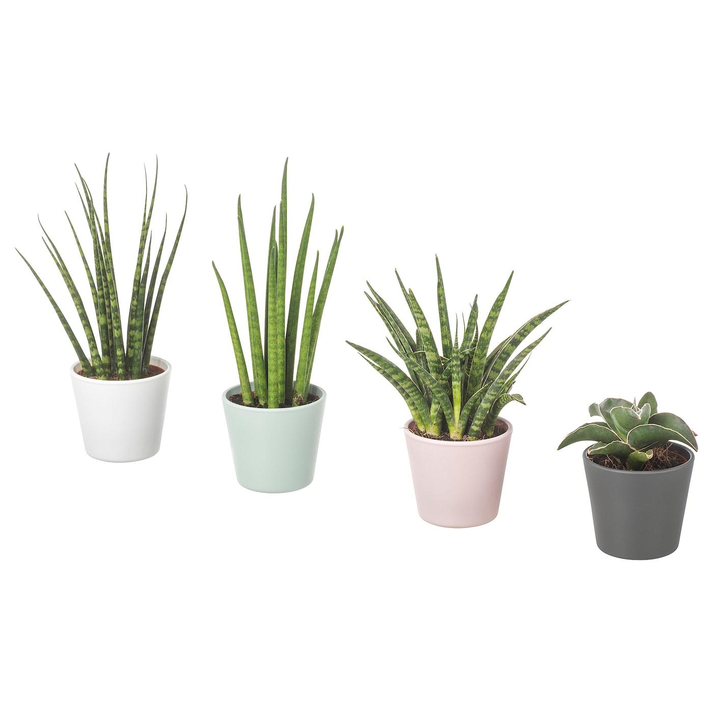 Plantas Naturales | IKEA on